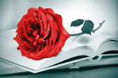 Red rose and some books — Stock Photo