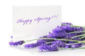 Happy spring — Stock Photo