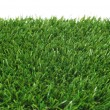 Grass — Stock Photo #21015303