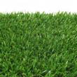 Grass — Stock Photo #21015303