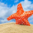 Stock Photo: Seastar