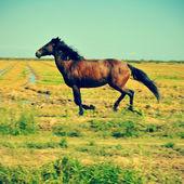 Horse galloping — Stock Photo