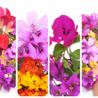 Flowers collage — Stock Photo