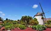 Windmill in Antigua, Fuerteventura, Canary Islands, Spain — Stock Photo