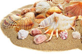 Sea shells on the sand — Stock Photo