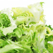Escarole endive — Stock Photo #21912023
