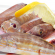 Raw fishes from the mediterranean sea - Stock Photo
