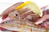 Raw fishes from the mediterranean sea — Stock Photo