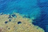 Gros plan d'une eau de mer d'un bleu tropical — Photo