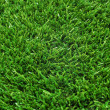 Grass — Stock Photo #22953546