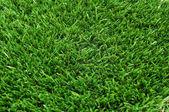 Trawy — Zdjęcie stockowe