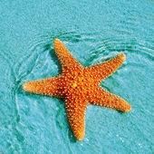 Seastar — Stock Photo