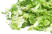Escarole endive — Stock Photo
