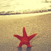 Seastar en la orilla de una playa — Foto de Stock