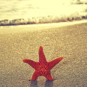 Seastar on the shore of a beach — Stock Photo