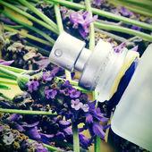 Lavender fragrance — Stock Photo