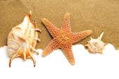 Deniz kabuğu kabuğu ve denizyıldızı kum üzerinde — Stok fotoğraf