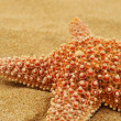 Starfish on the sand of a beach - Stock Photo
