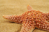 Starfish on the sand of a beach — Stock Photo