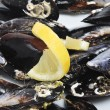 Mussels — Stock Photo #27261413