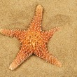 Stock Photo: Starfish on sand of beach