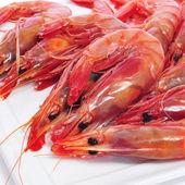 Fresh raw shrimps — Stock Photo
