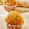 Magdalenas, typical spanish plain muffins — Stock Photo #30906697