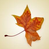 Autumn leaf — Stock Photo