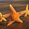 Stock Photo: Starfishes on sand of beach