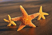 Starfishes on the sand of a beach — Stock Photo