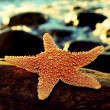 Stock Photo: Starfish on rock