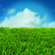 Stock Photo: Grass and the sky