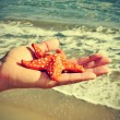 Stock Photo: Starfish on beach