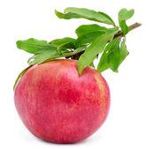 Pomegranate fruit — Stock Photo