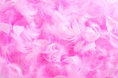 Pink feathers — Stock Photo