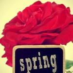 Spring — Stock Photo #41747633