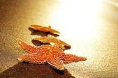 Seastars on the shore of a beach — Stock Photo