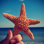 Starfish on the beach, with a retro effect — Stock Photo