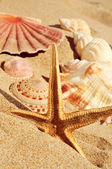 Starfish and seashells on the sand of a beach — Stock Photo