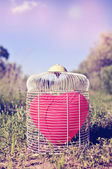 Heart-shaped balloon in a birdcage in the field, with a retro fi — Stock Photo