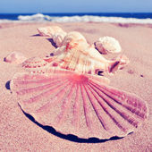 Some seashells on the sand of a beach with a retro filter effect — Stock Photo