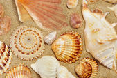 Some seashells on the sand of a beach — Stock Photo
