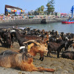 Traditional Bath Goats Feast in Puerto de la Cruz, Tenerife, Can — Stock Photo #8041846