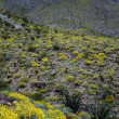 Stock Photo: Spring in Mojave Desert