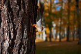 Squirrel sitting on the tree — Стоковое фото