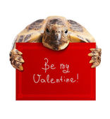 Turtle with Greeting Card — Stock Photo