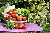 Different fresh vegetables — Stock Photo