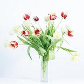 Tulips square — Stock Photo