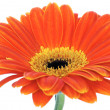 Panoramic flower — Stock Photo
