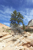 Zion park — Stock Photo